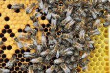bernard chavigny apiculteur céré la ronde
