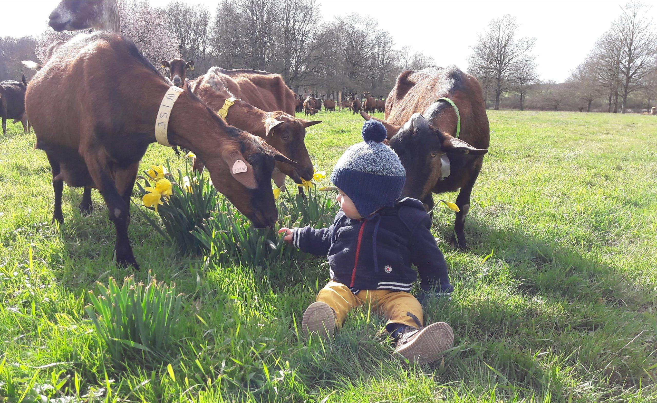 Elodie Jouveau & Antoine Durel - Producteurs de fromages de chèvres